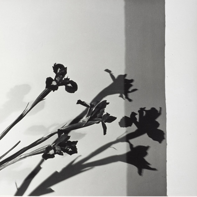 Robert Mapplethorpe, Irises, N.Y.C. (Y Portfolio), 1977, the J. Paul Getty Museum, Los Angeles, jointly acquired by the J. Paul Getty Trust and the Los Angeles County Museum of Art, partial gift of the Robert Mapplethorpe Foundation; partial purchase with funds provided by the David Geffen Foundation and the J. Paul Getty Trust, 2011, © Robert Mapplethorpe Foundation