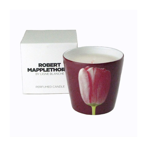 Mapplethorpe_Candle_Red_tulip_and_box.6_large