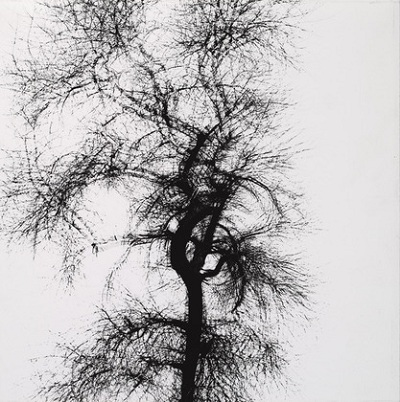 Harry Callahan, Tree, 1956, The Marjorie and Leonard Vernon Collection, gift of The Annenberg Foundation, acquired from Carol Vernon and Robert Turbin, © 2013 The Estate of Harry Callahan