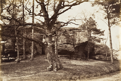 Henrietta Augusta Mostyn, Tree and Rock, c. 1850, The Marjorie and Leonard Vernon Collection, gift of The Annenberg Foundation, acquired from Carol Vernon and Robert Turbin