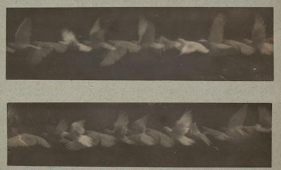 Étienne-Jules Marey, Analysis of the Flight of a Pigeon by the Chronophotographic Method, 1883–87, Horace W. Goldsmith Fund through Robert B. Menschel, courtesy of the Museum of Modern Art, New York